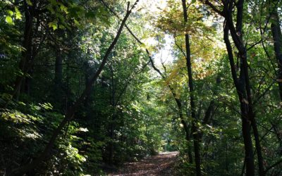 Peaceful paths through the woods…