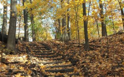 Walking paths to enjoy….